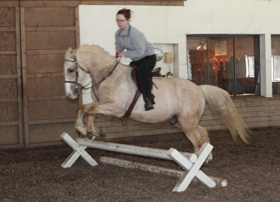 Marlena Froehlich's new horse