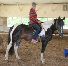 Pinto Gelding sold to UNH for their riding program