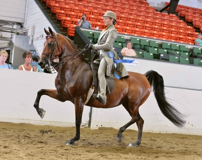 Congratulations Claire Campbell on her new horse