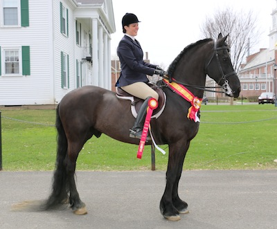 Chrislar student on a Friesan horse - Won Reserve Championship