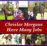 Chrislar Morgan horses have many jobs (Modelling, TV, MOVIES) Click for details