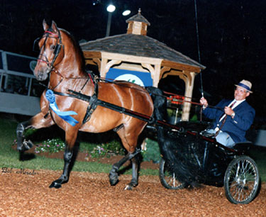 Kevin Solimine driving his morgan horse