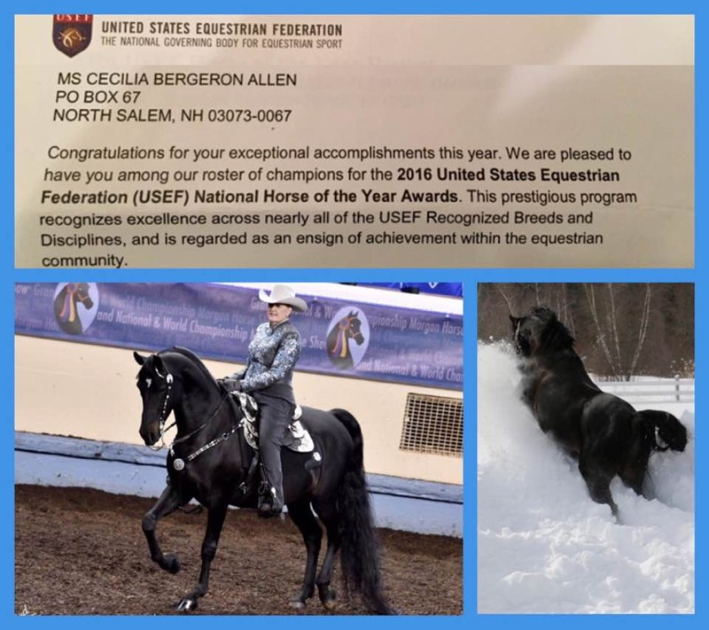 Congratulations Letter from United States Equestrian Federation to Sis Bergeron 2016 USEF National Horse of the Year