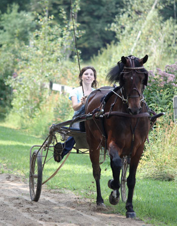 lease a horse and learn new skills like carriage driving