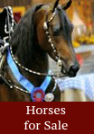 horses for sale - click for info