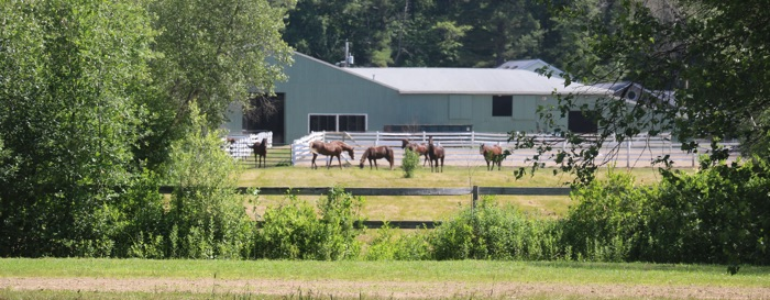 Rear view of Chrislar farm horse barn with horses grazing in meadow.