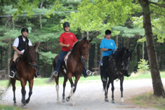 pinto mare for sale - shown here on trail with group
