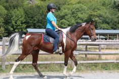 pinto mare for sale - riding outside